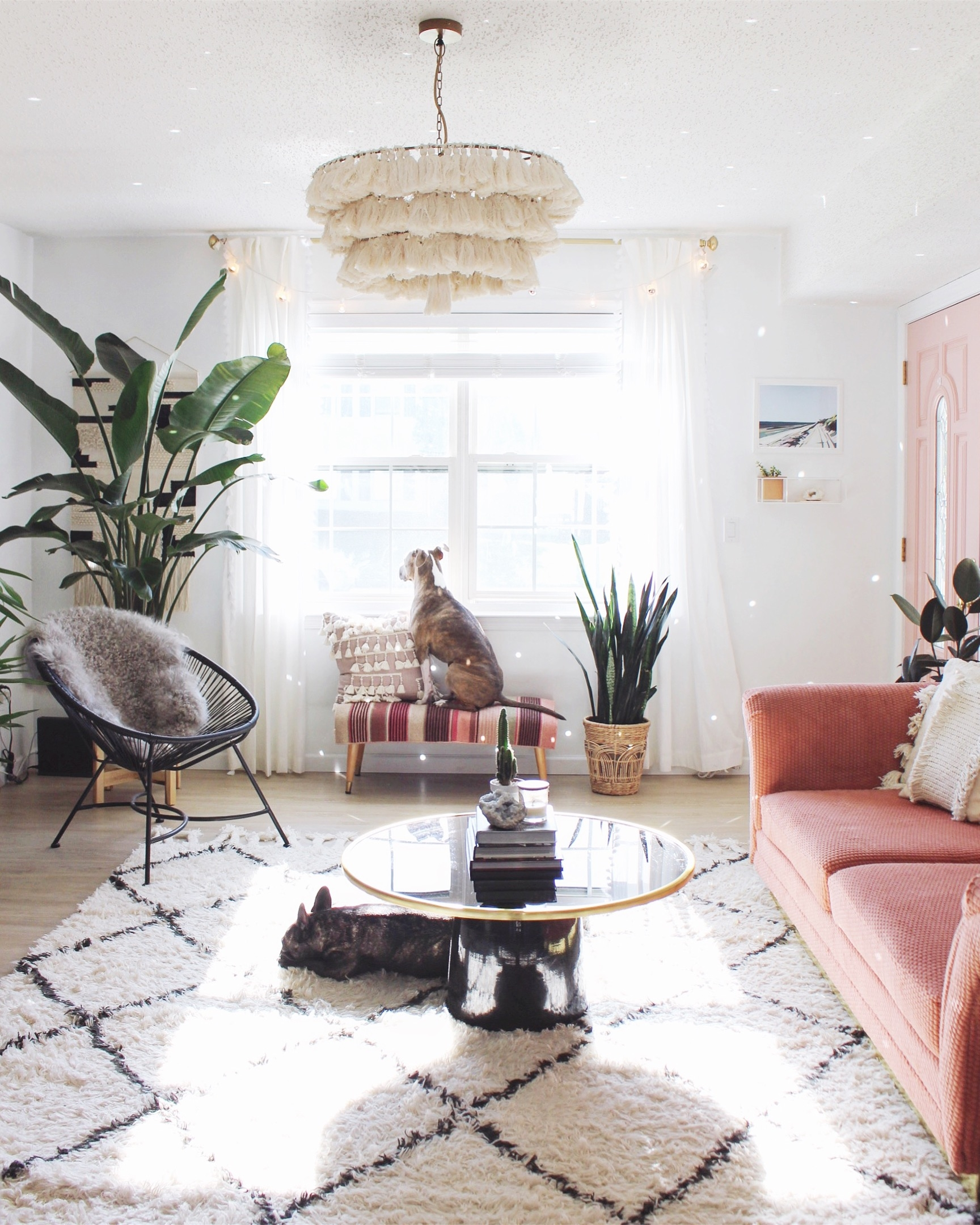 Pet Friendly Home Decor: Pet Friendly Rugs And Tips With Rugs